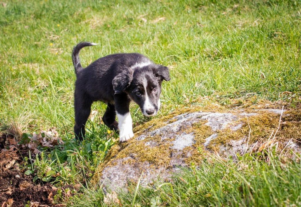 Junger Hund auf der Wiese