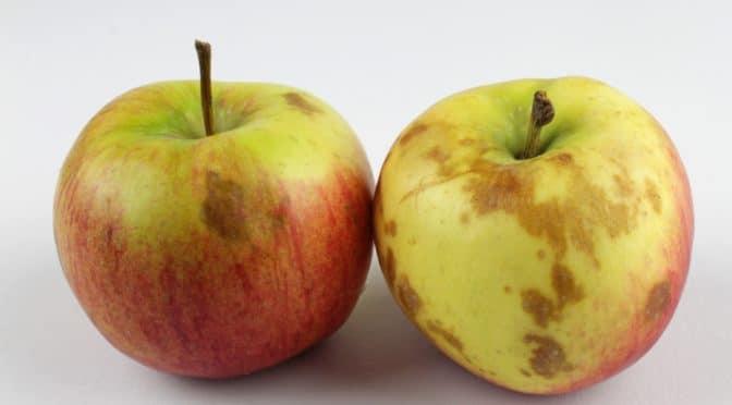 Gesüßte Getränke und Fruchtsäfte erhöhen das Risiko für..