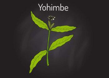 Yohimbe ist ein Aphrodisiakum, das aufgrund seiner Neben- und Wechselwirkungen nur mit Vorsicht eingenommen werden sollte. (Bild: foxyliam/fotolia.com)