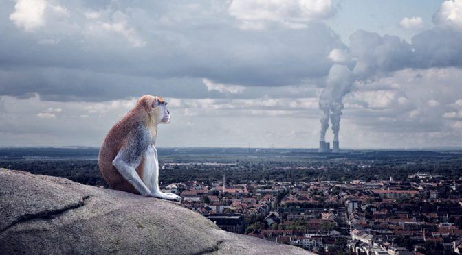 Ein Affe sitzt auf einem Felsen und schaut auf eine Stadt