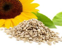 Sonnenblume und Sonnenblumenkerne