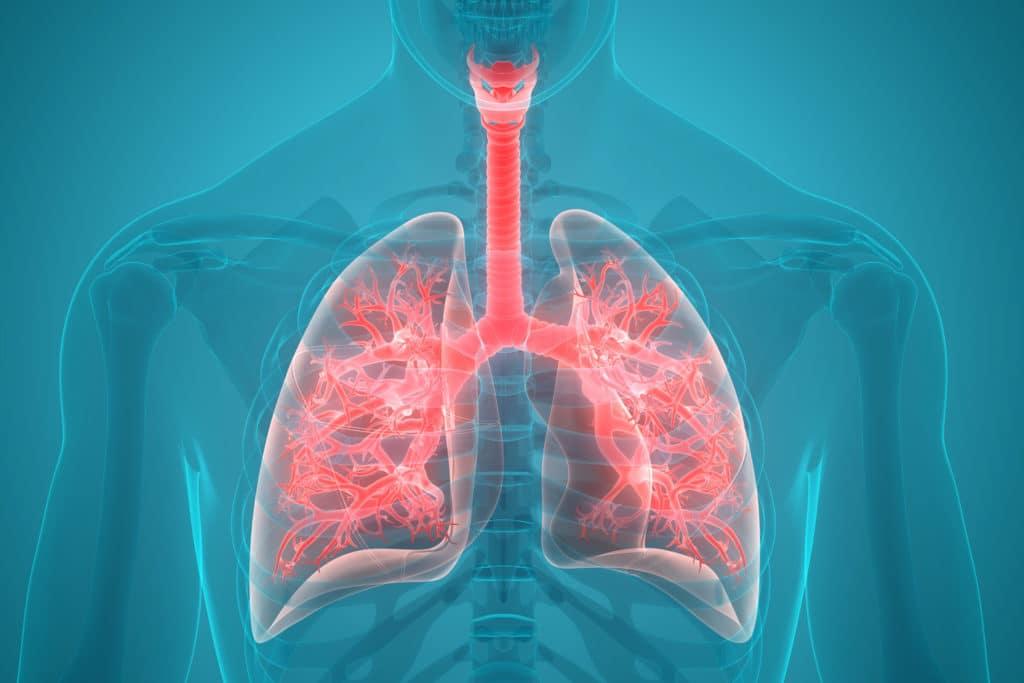 Computerdarstellung der Atemwege
