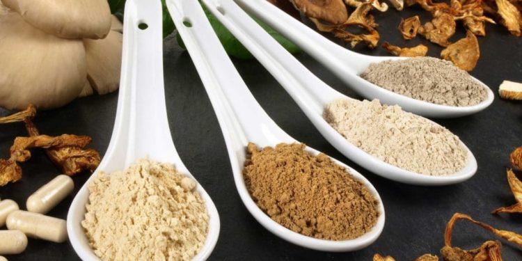 Heilpilze in getrockneter und gemahlener Form auf Porzellanlöffeln