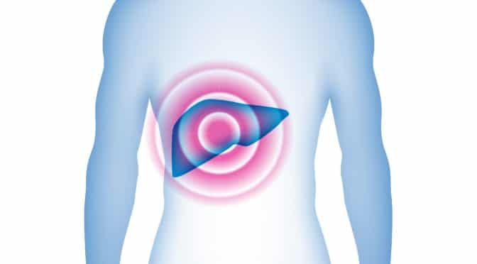 Visualisierung männlicher Oberkörper mit Leber