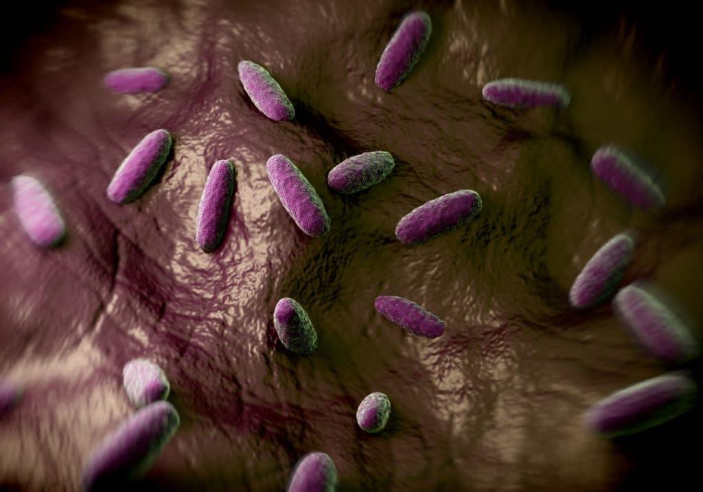 Bakterium Salmonella typhimurium