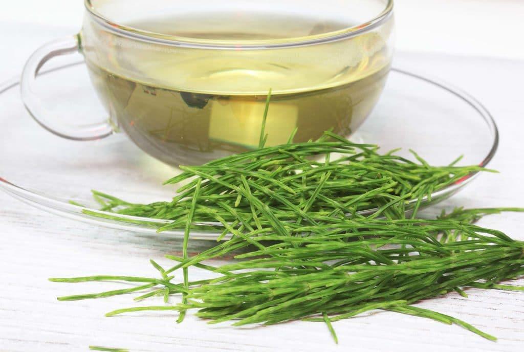 Kräutertee und Heilpflanze Zinnkraut