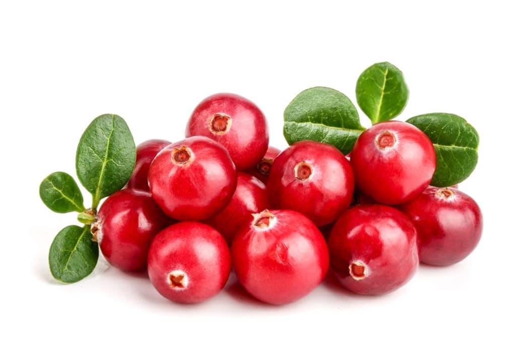 Cranberries mit Blättern auf weißem Hintergrund.