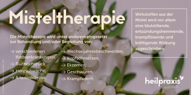 Übersicht Misteltherapie mit den wichtigsten Wirkungen und Anwendungsgebieten