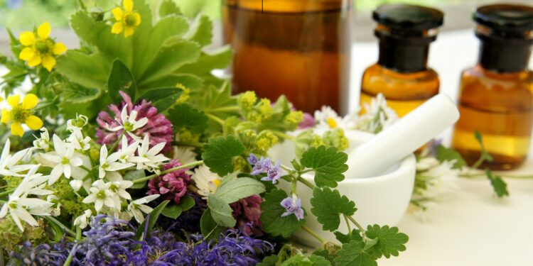 Bund verschiedener Heilpflanzen, Mörser, Pistill und Glasflaschen mit Tinkturen