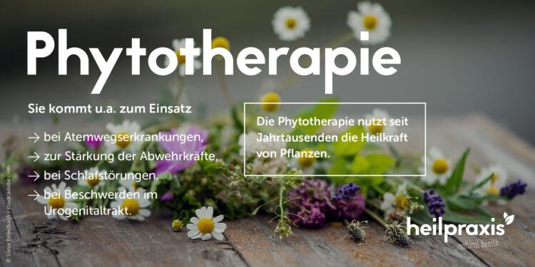 Phytotherapie Übersichtsgrafik mit kurzer Beschreibung und Anwendungsbeispielen