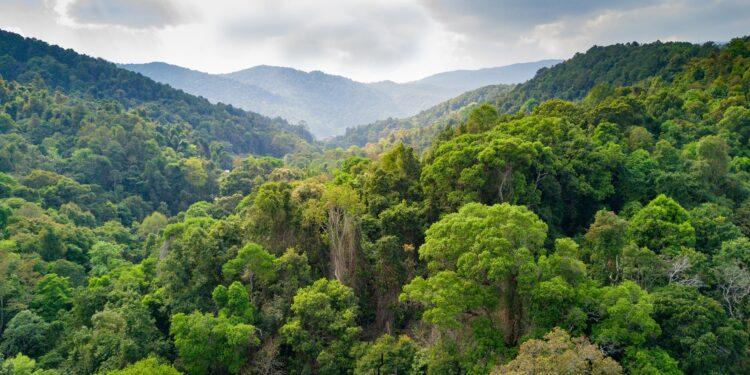 Wolkiger Himmel über mit Regenwald bewachsenen Hügeln