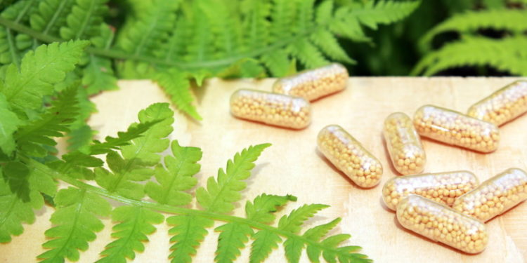 Farnkraut - Medizin