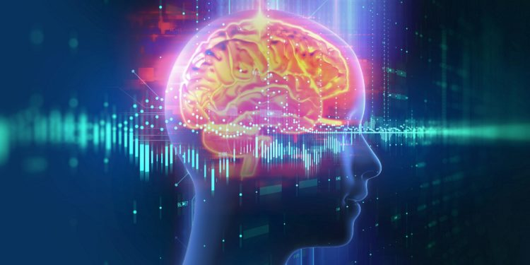 3-D-Darstellung des menschlichen Gehirns