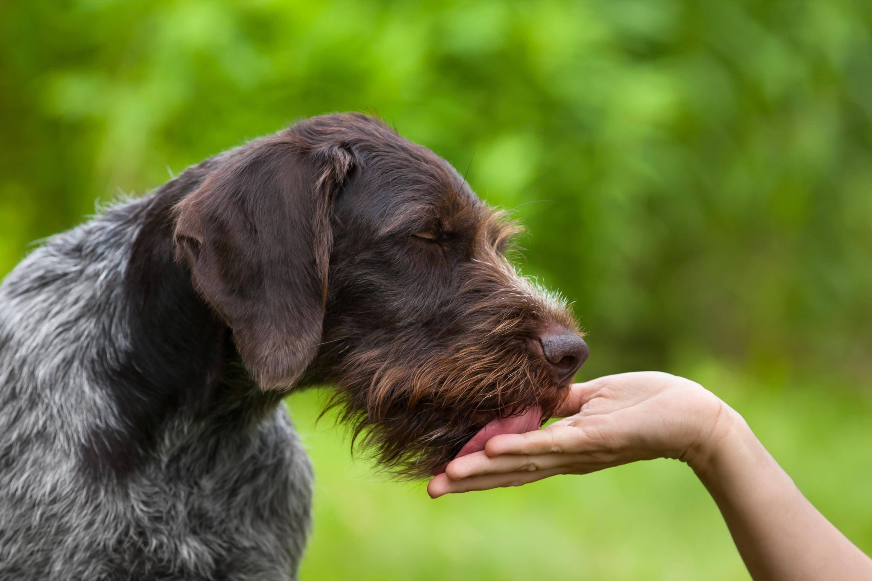 Krankheiten Durch Hundespeichel