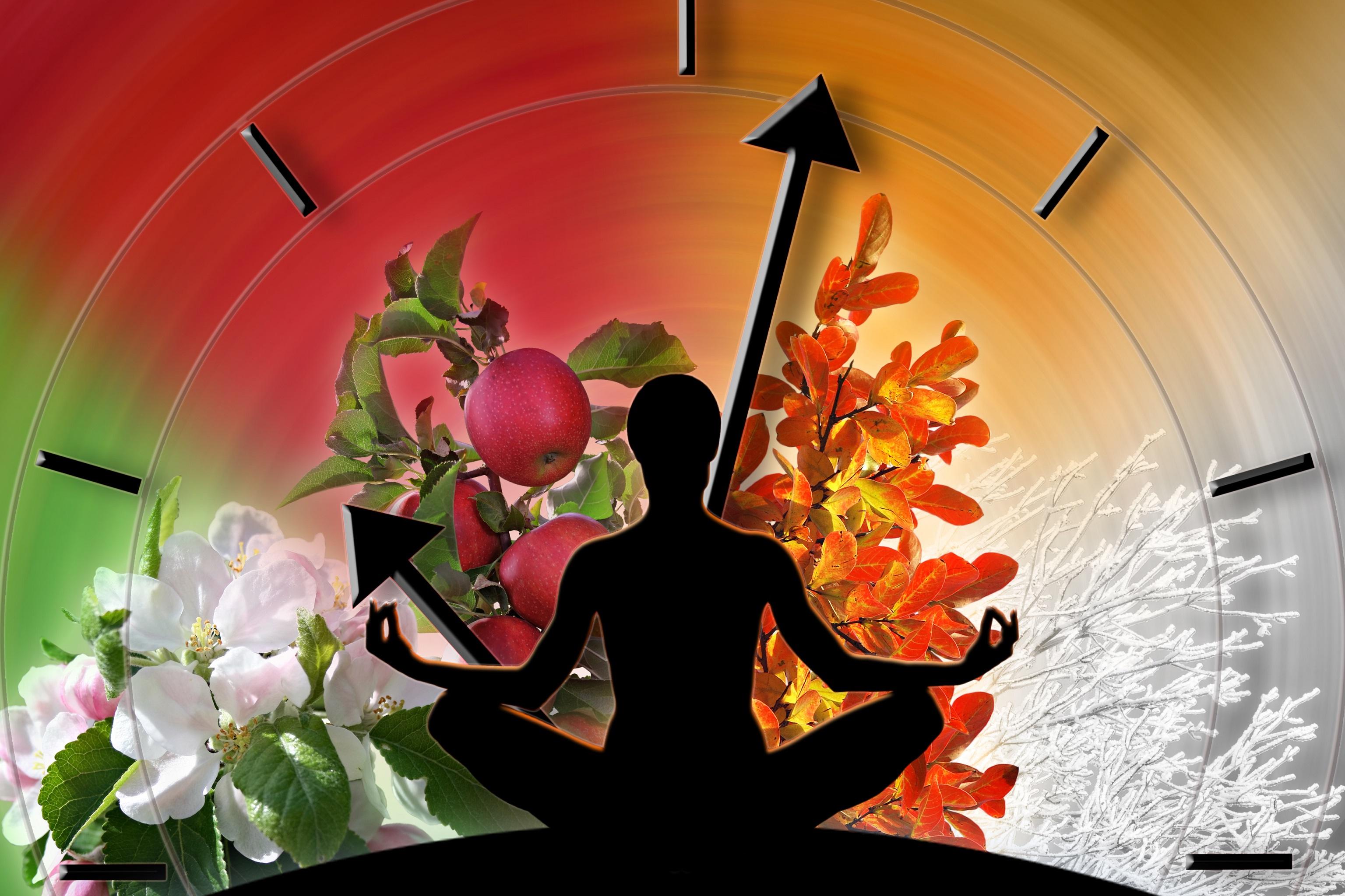 Unsere Ernährung beeinflusst Hormone und die innere Uhr