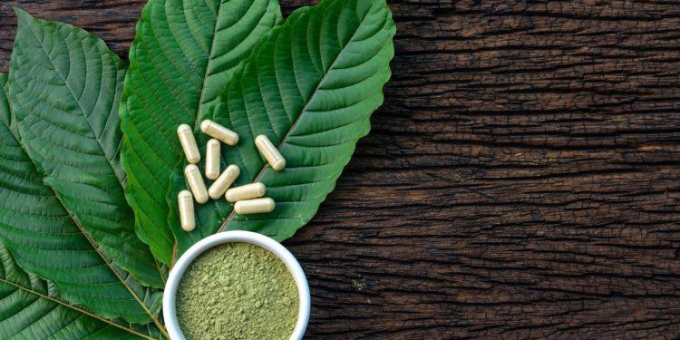 Das Bild zeigt die Blätter des Kratombaumes und daraus hergestellte Kapseln und Pulver.