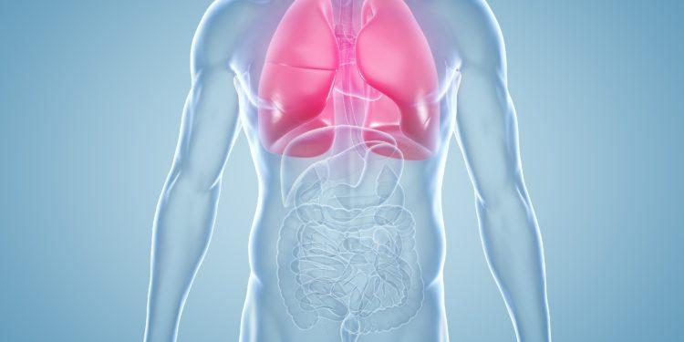 Anatomische 3-D-Illustration Schematische Abbildung eines männlichen Körpers mit rot markierten Lungenflügeln.