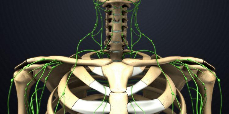 Grafik der Lymphbahnen im oberen Torso.