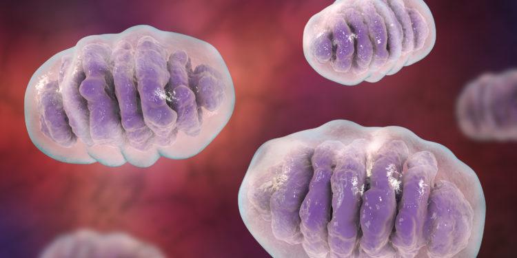 3D-Darstellung von Mitochondrien.