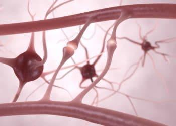 3D-Darstellung von Nervenfasern.