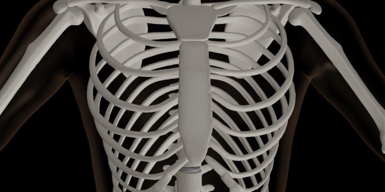 3D-Rendering des Oberkörpers eines Skeletts.