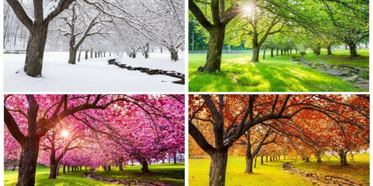Ein Baum im Winter, Frühling, Sommer und Herbst.