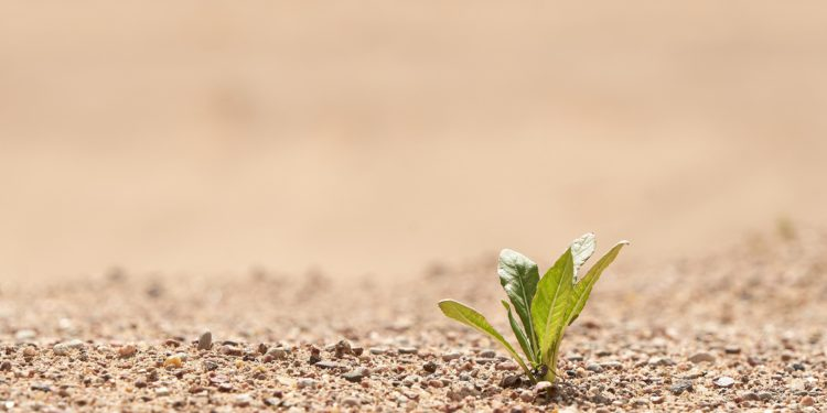 Kleine grüne Pflanze auf Wüstenboden