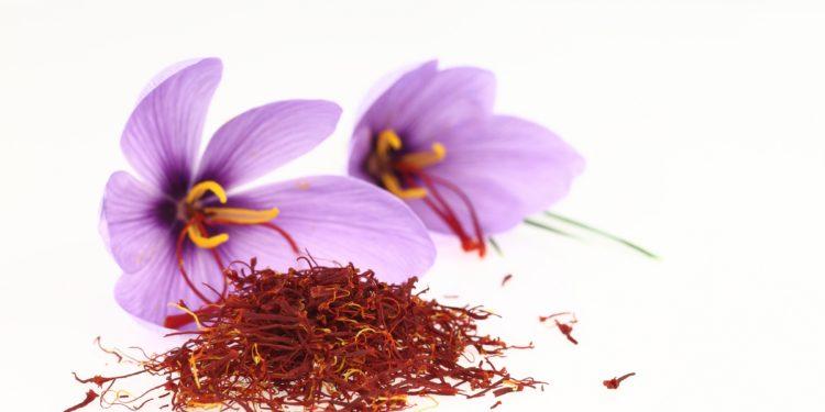 Zwei Blüten des Crocus-Sativus und Safranfäden.