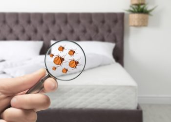 Eine Person hält eine Lupe vor ein Bett, unter der Bettwanzen dargestellt sind.