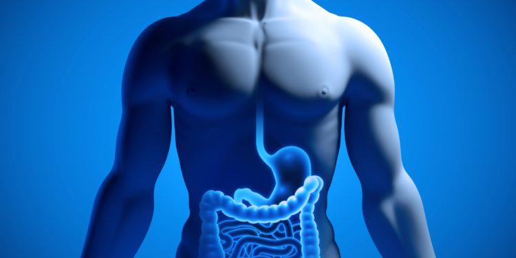 Anatomische 3D-Illustration eines männlichen Oberkörpers mit Übersicht des Magen-Darm-Trakts.