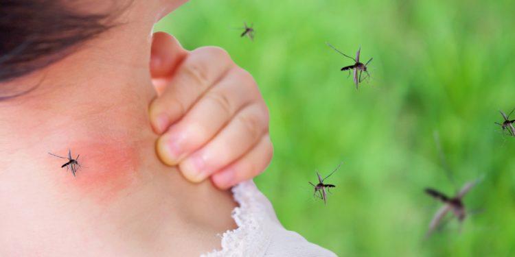 Junges Mädchen mit einem roten Ausschlag am Nacken nach einem Stich einer Mücke
