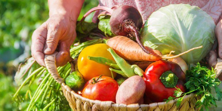 Seniorin hält einen Korb voller Gemüse