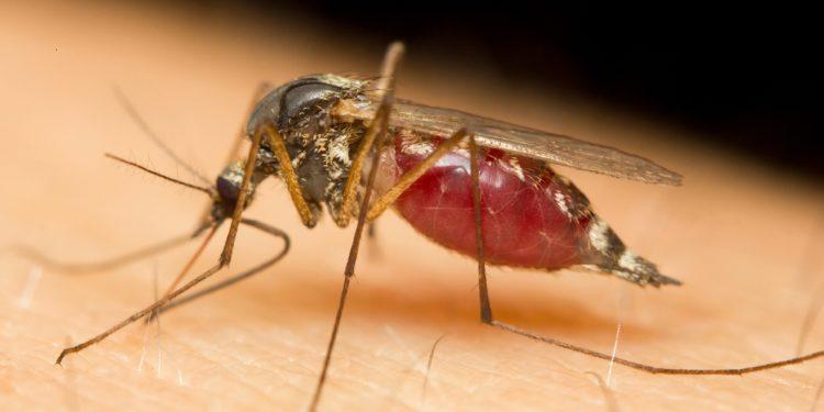 Eine Mücke sitzt auf menschlicher Haut.