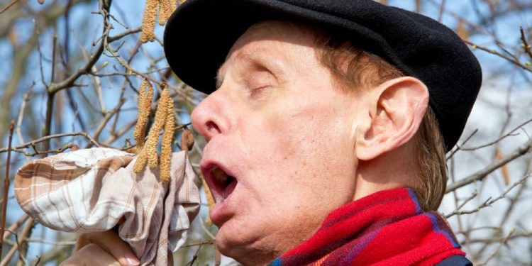 Senior mit Heuschnupfen niest in ein Taschentuch