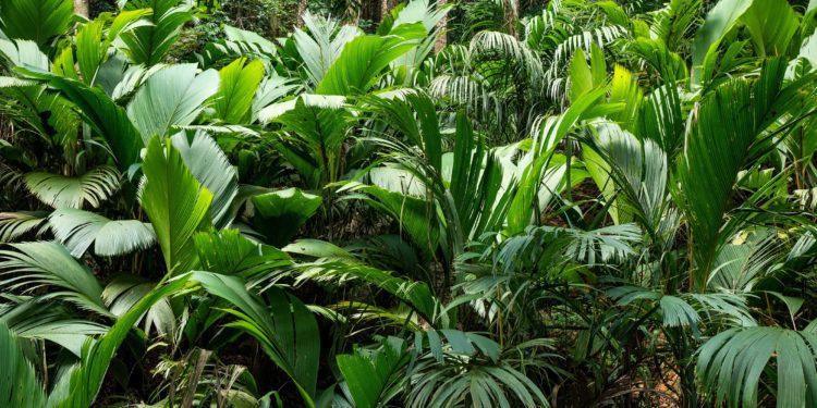Farne in verschiedenen Größen im tropischen Regenwald