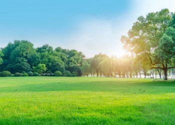 Wie wirken sich Grünflächen und Parks auf die Kriminalität aus? (Bild: 昊 周/Stock.Adobe.com)