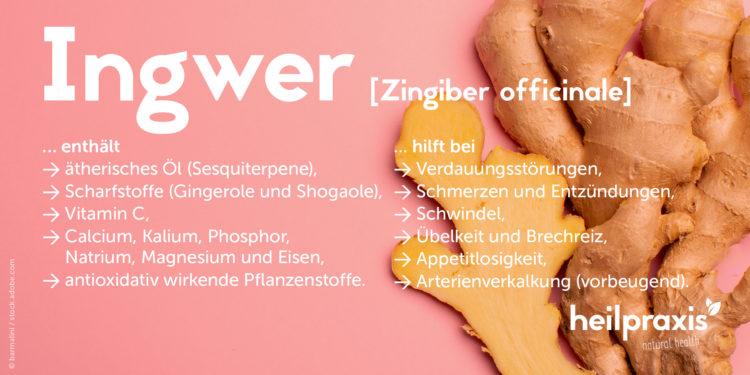 Ingwer Übersichtsgrafik mit einer Auflistung der Inhaltsstoffe und Wirkung.