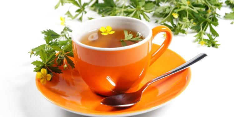 Fingerkrautpflanzen mit Teetasse