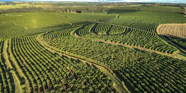 Eine Luftaufnahme einer Kaffee-Plantage in Brasilien.