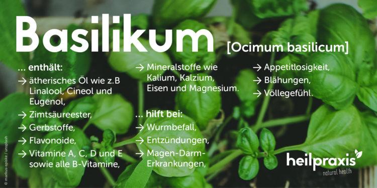 Basilikum Übersichtsgrafik mit einer Auflistung der Inhaltsstoffe und Wirkung.