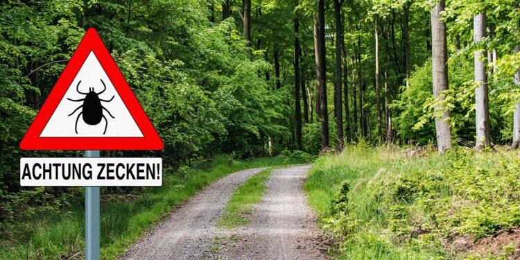 Zeckenwarnschild an einem Waldweg