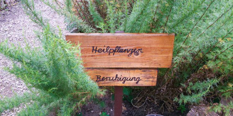 Eberraute in einem Beet mit einer Holztafel, auf welcher die Worte Heilpflanzen und Beruhigung eingraviert sind.