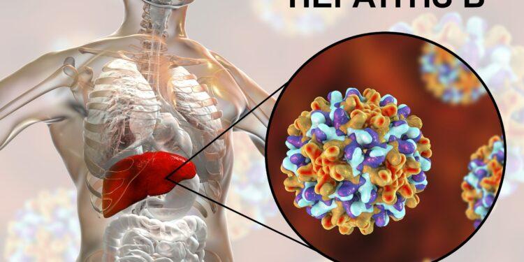 Eine grafische Darstellung von Hepatitis-B-Viren.