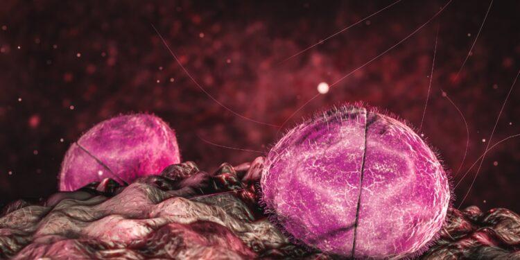 Eine grafische Darstellung des Bakteriums Neisseria meningitidis.