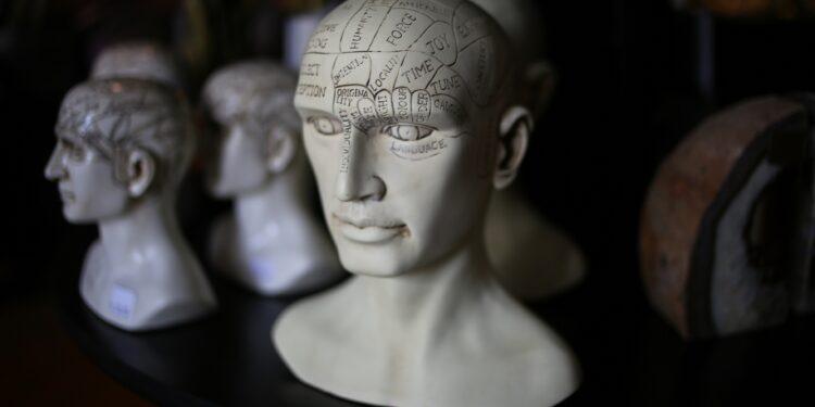 Mehrere beschriftete Schädelbüstenmodelle