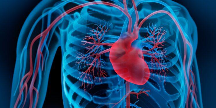 Darstellung des Herzens und des Blutkreislaufs