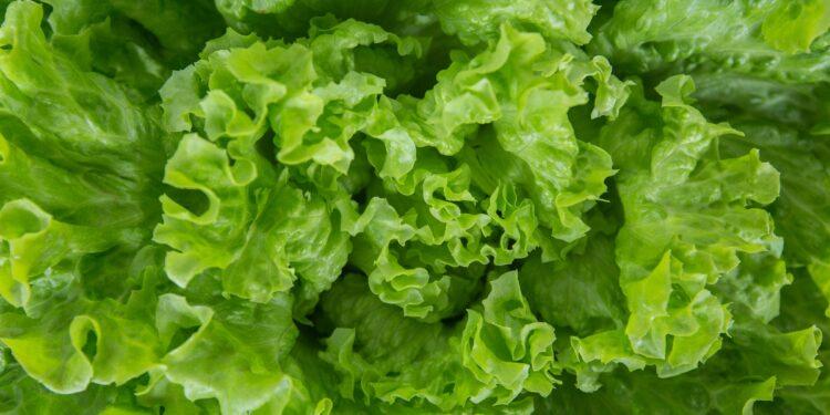 Nahaufnahme eines Salatblattes von oben.