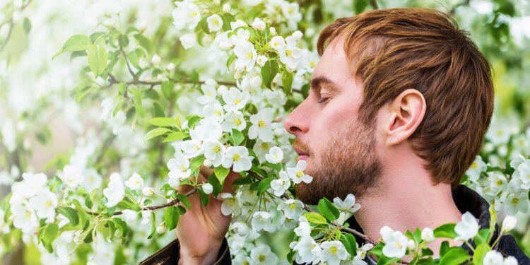 Mann riecht an weißen Blüten