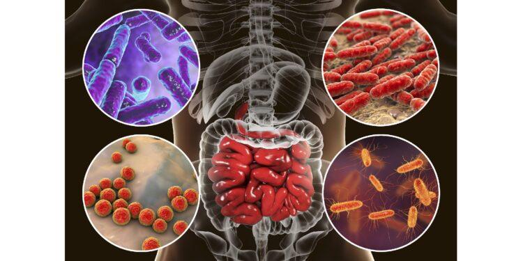 Eine grafische Darstellung verschiedener Bakterien, die den Darm besiedeln.