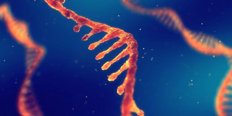 Eine Strang einer Ribonukleinsäure (RNA).